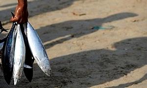 fish-trincomalee-300x198